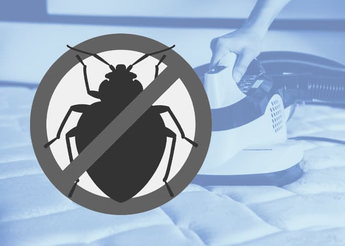 remove bed bugs from mattress