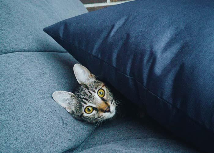 cat licking my pillow